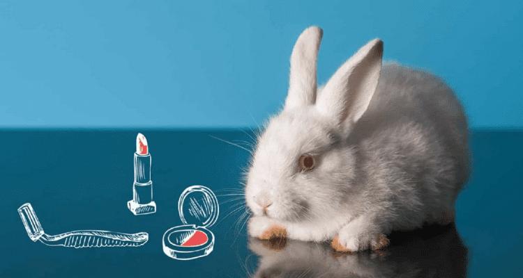 Lee más sobre el artículo 5 Aplicaciones para saber que productos son cruelty free